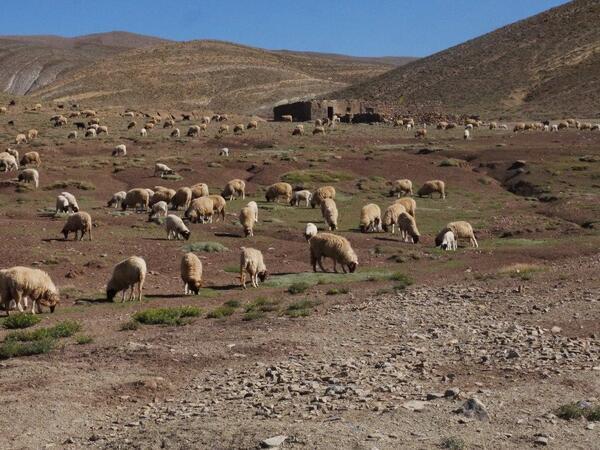 Là un troupeau de mouton