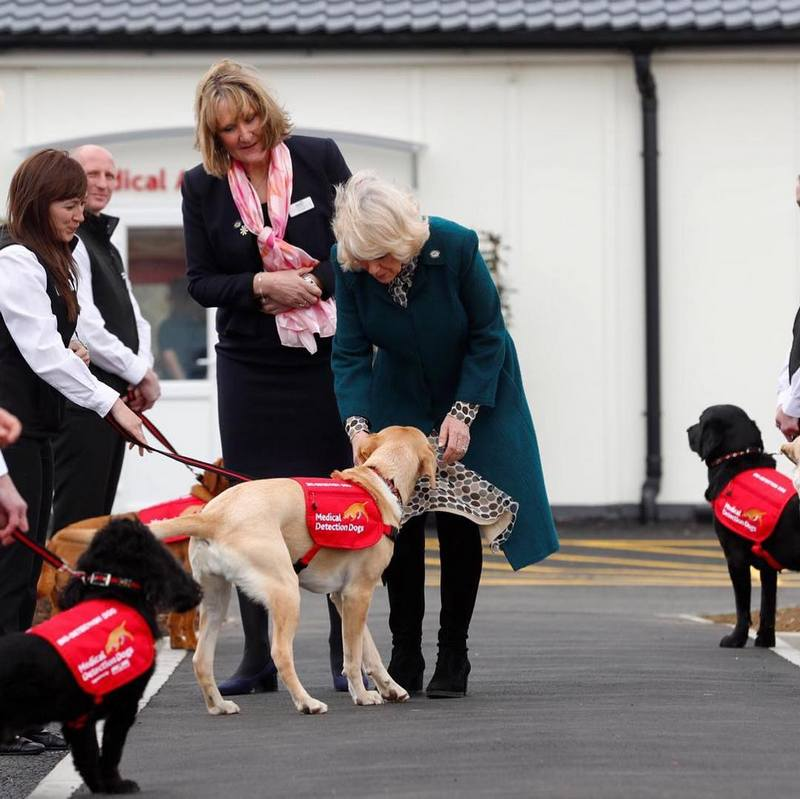 Medical Detection Dogs centre