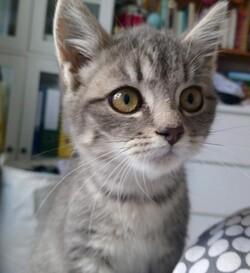 Ortax et Otchoum - 4 mois - à adopter ensemble
