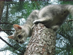 Petit chaton deviendra grand...