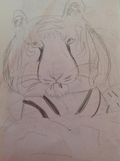 Tigre au crayon
