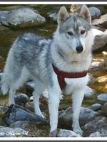 Jaïa (8 mois)