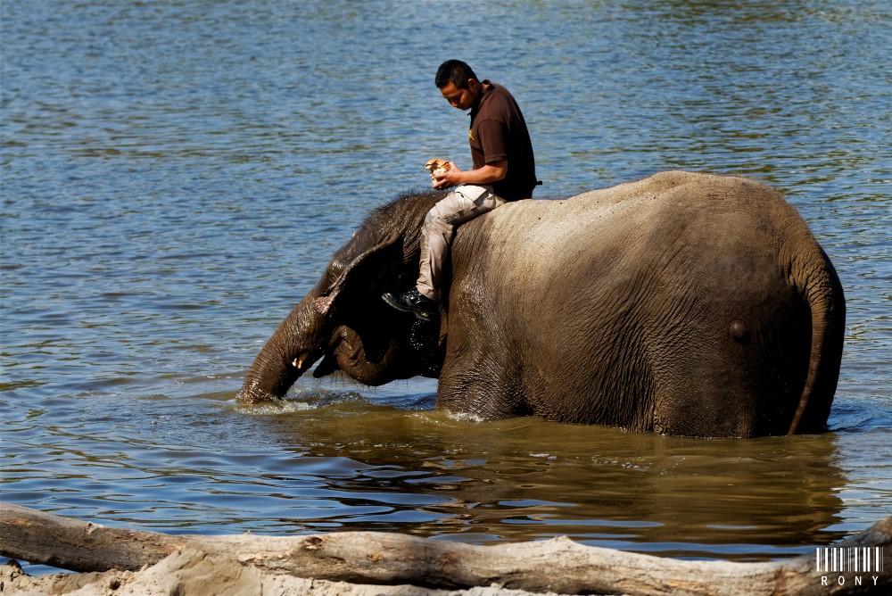 Le bain des éléphants (Edition 2018)