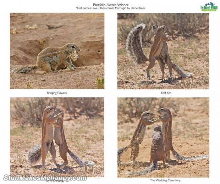 Gagnants du concours Comedy Wildlife Photography Awards 2019 - Funny Animal Pictures