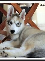 Jasko (2 mois)