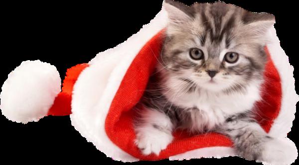 Tubes animaux Noël 3