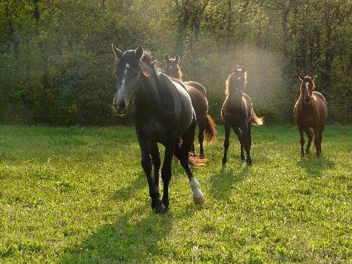 chevaux en Ardèche