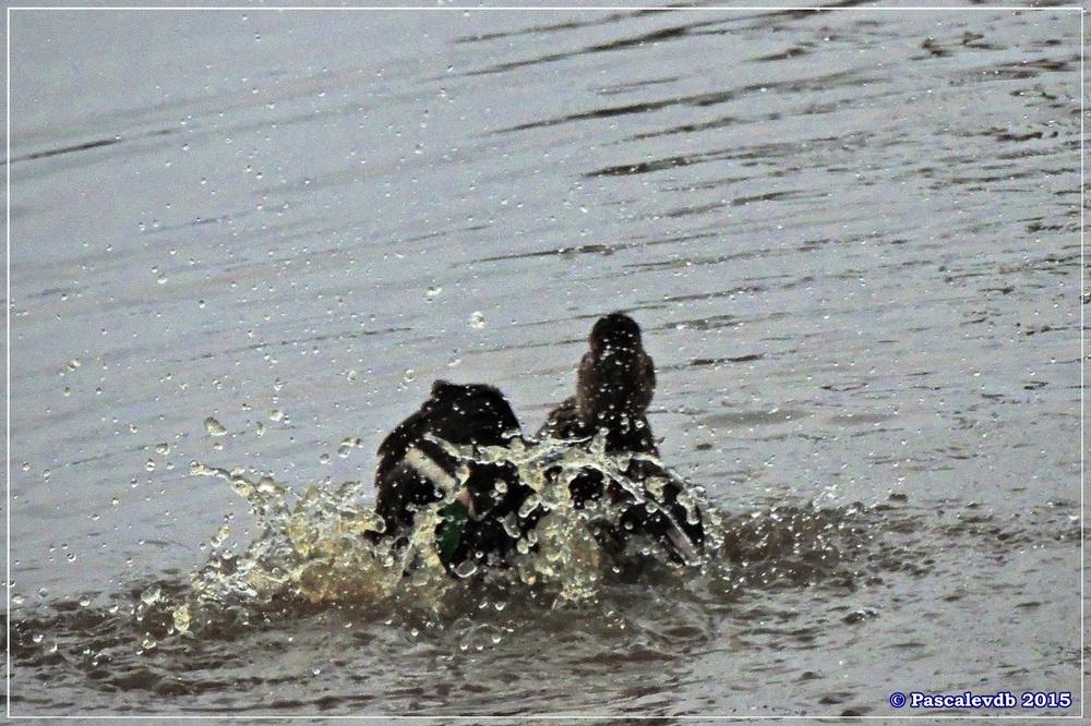 Réserve ornithologique du Teich (mars 2015) - 8/8