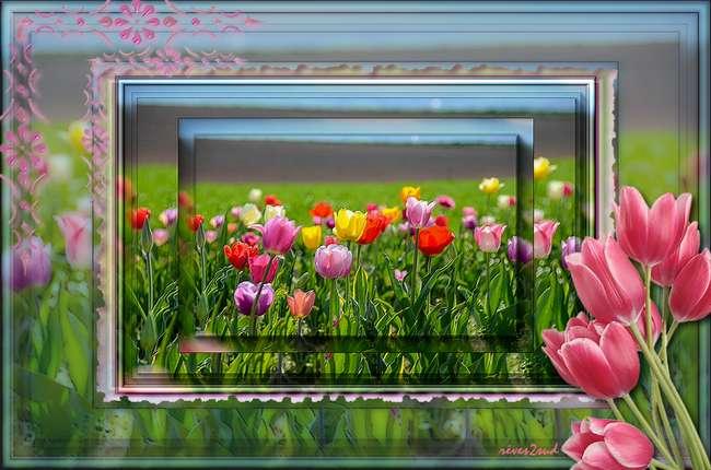 Superposition de tulipes