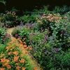 massif-jardin-vivace.jpg