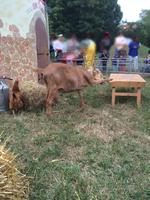 La ferme itinérante Tiligolo