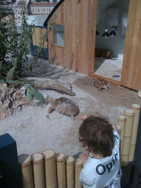 Les tortues de Monaco (Merci fanne)