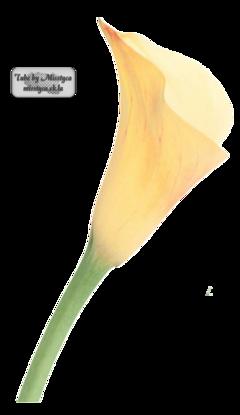Flower's 3.