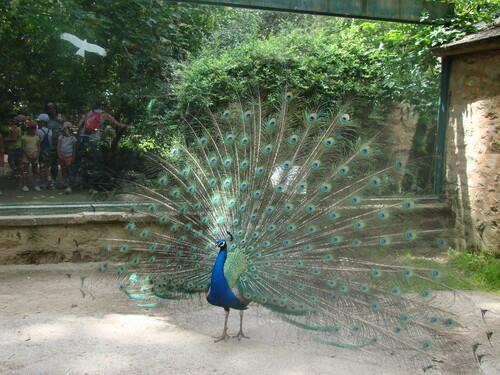 Le zoo de Branféré