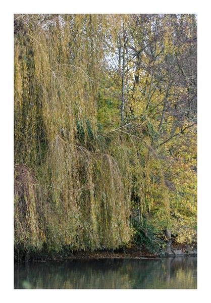 Paysages aux couleurs de l'automne