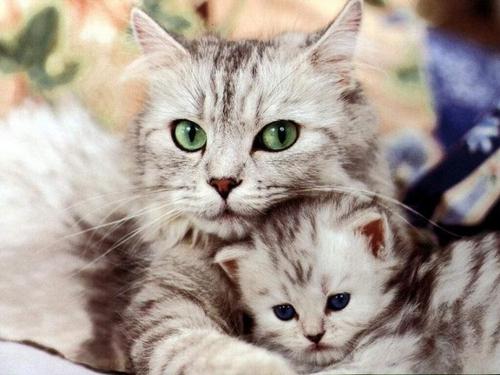 Pour les amoureux des chats - 2 -