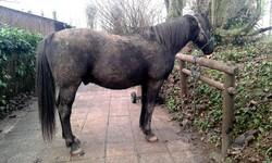 "Nariolo seriat-il (enfin) un cheval d'attelage ""Normal""?"