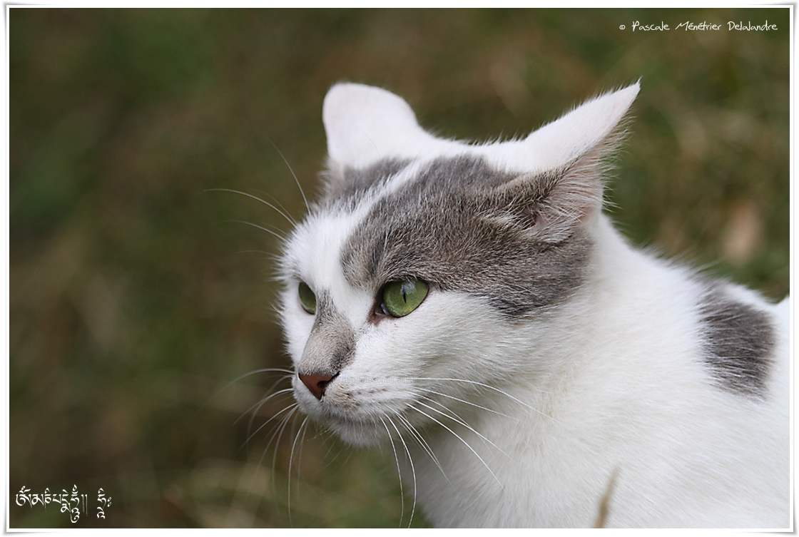 Portraits de chats...