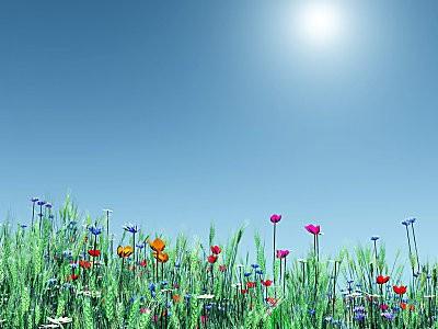 spring-flowers-wallpaper-1024x768-1001092.jpg