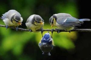 oiseaux expriment