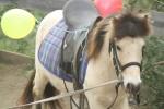le débourrage des poneys