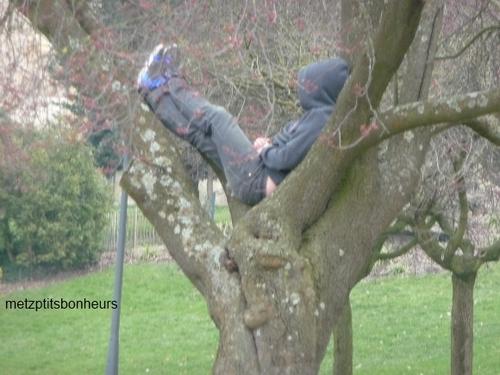... auprès de mon arbre...