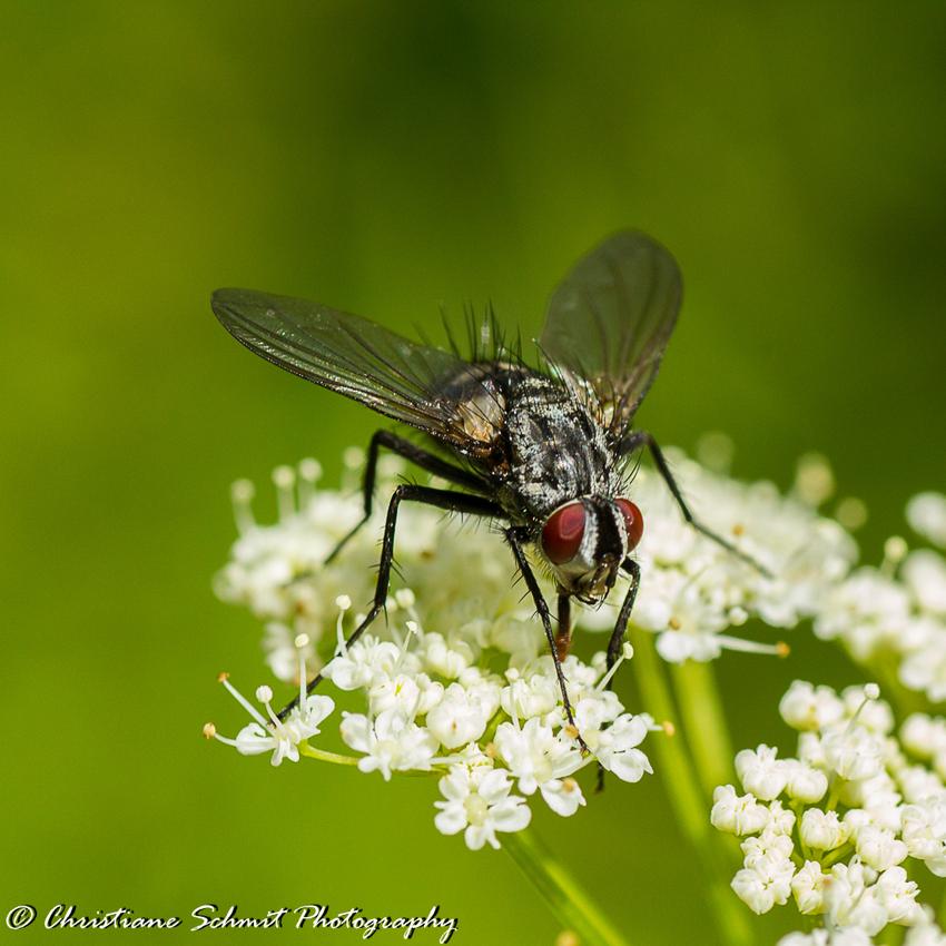Juste une petite mouche