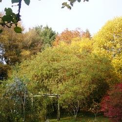 Malus, Liriodendron, Quercus,rubra,...
