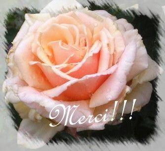 rose__