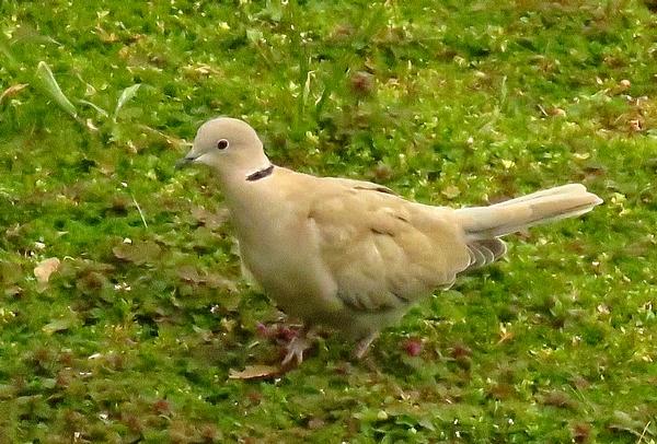 D'autres oiseaux sont venus visiter mon jardin cet hiver...