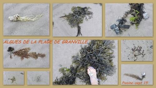 VIVE LA PLAGE DE NORMANDIE...