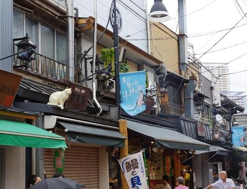 09 - Des chats sur les toits