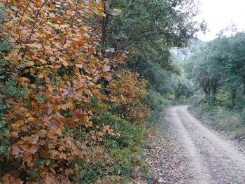 Couleurs d'automne dans le vallon d'Agnis
