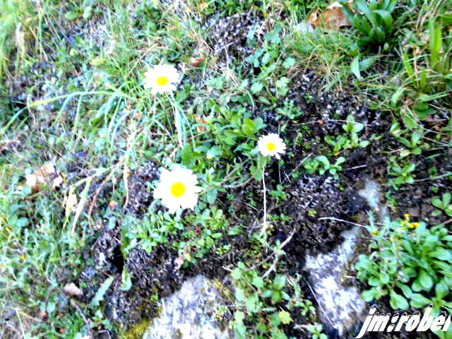 A la Saint Gaston encore une balade de printemps