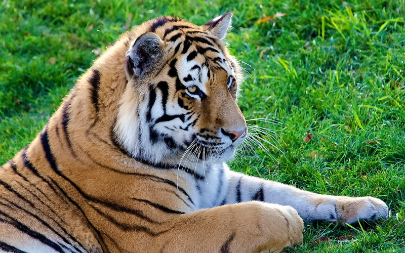 20 photos d'animaux - 2