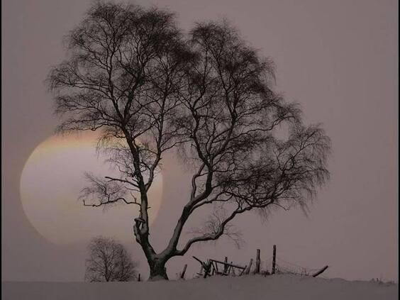 Quelle beauté que ces arbres