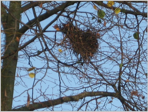 Entre ombre et lumière : nid