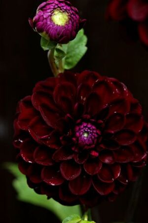 Les Jardins d'Aywiers - Automne 2015 - Mes achats