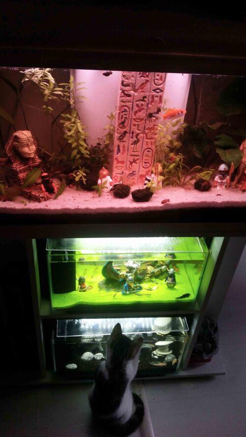 Un peu d'histoire dans nos aquariums de poissons