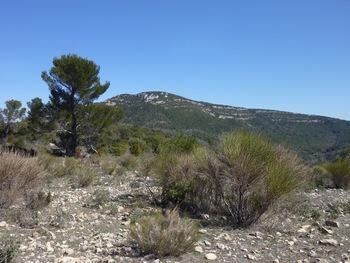 Le sommet de l'Amarron depuis le plateau (cote 550) au pied du Piberon