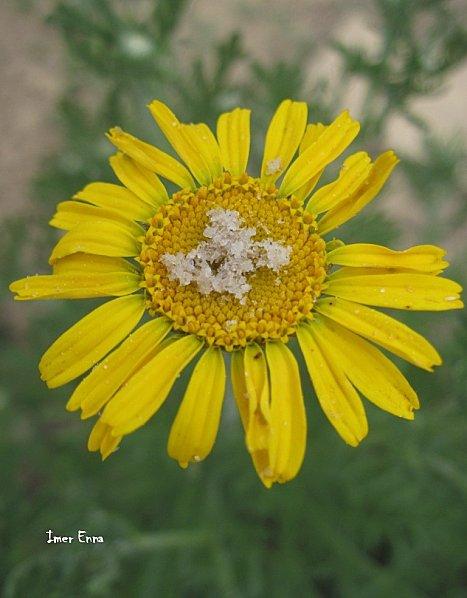 Fleurs-1100.JPG