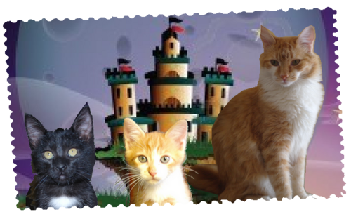 Cagnotte sauvez mes chats Gibbs, Jarrod et Sony