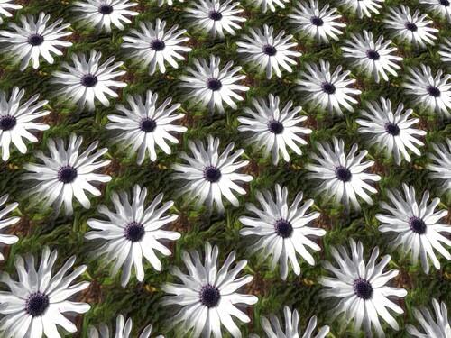Des fleurs pour Julie
