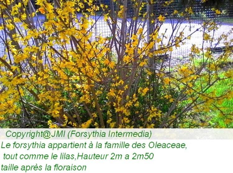 reconnaissance des végétaux avec les noms sur les photos