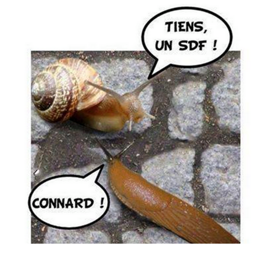 carapace limace escargot sdf