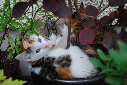flowerpot-copie-1.JPG