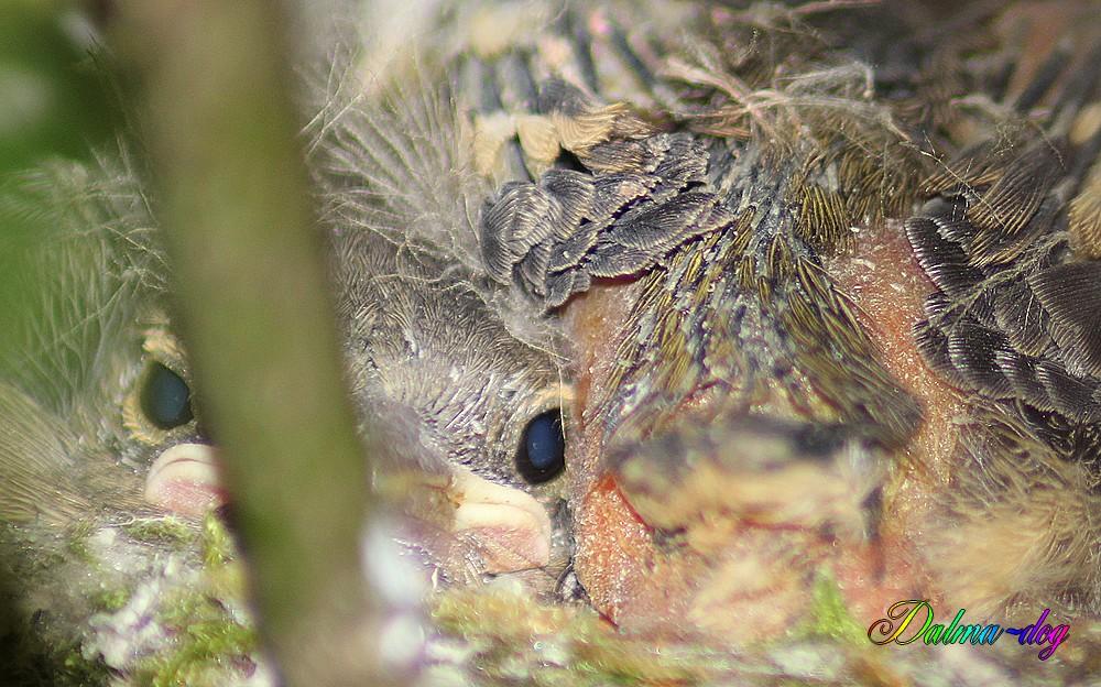 blottis dans le nid