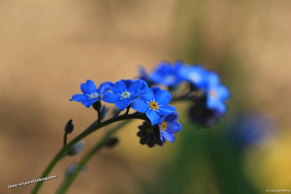 Bleu , Blanc , Rose