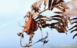 Araignée - p260