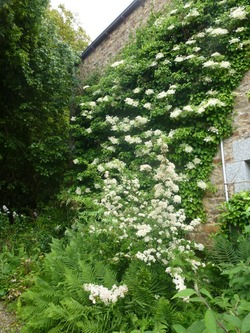 Ma collection d'Hortensias (Hydrangeas)
